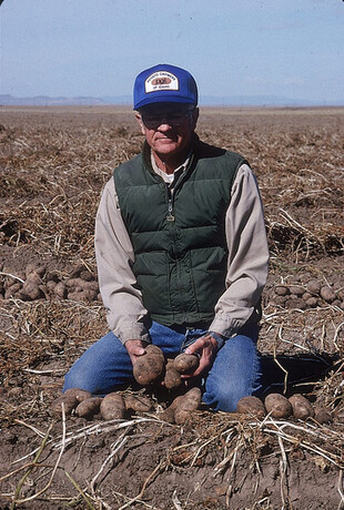 Del Reybould in the field with potatoes