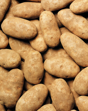 A Group of Idaho Russet Burbank Potatoes