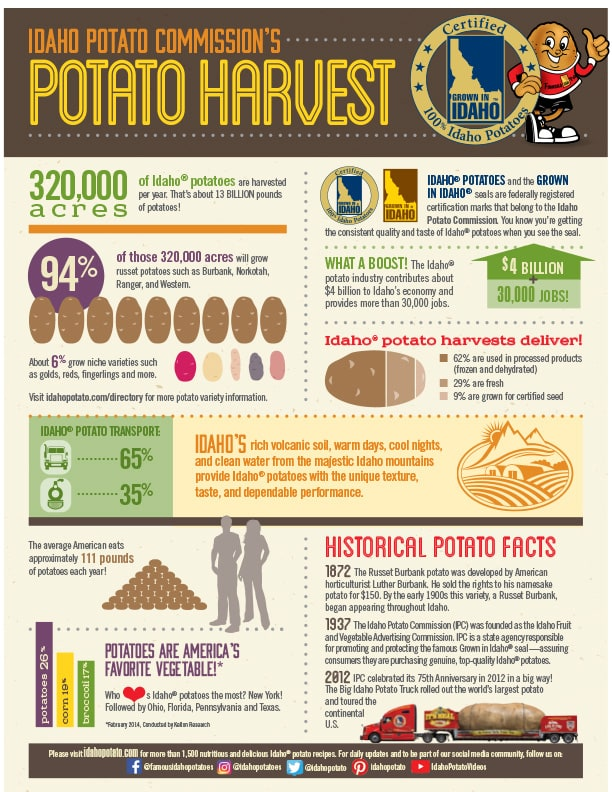 Potato Harvest Infographic